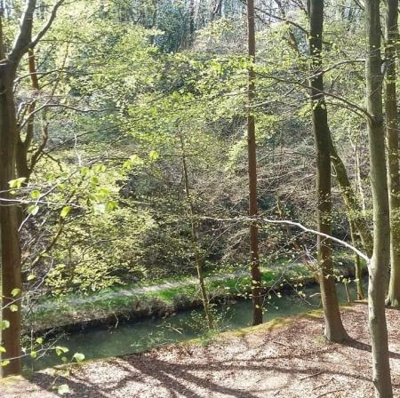 Basingstoke Canal Woods